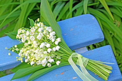 fleur-muguet